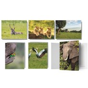 African Wildlife Note Cards ITNOTE15