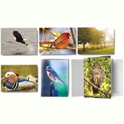 Bird Note Cards ITNOTE16